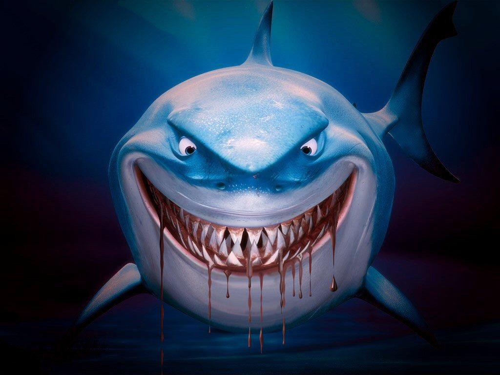Sharks Animal Shark Free Computer 90353 Wallpaper wallpaper