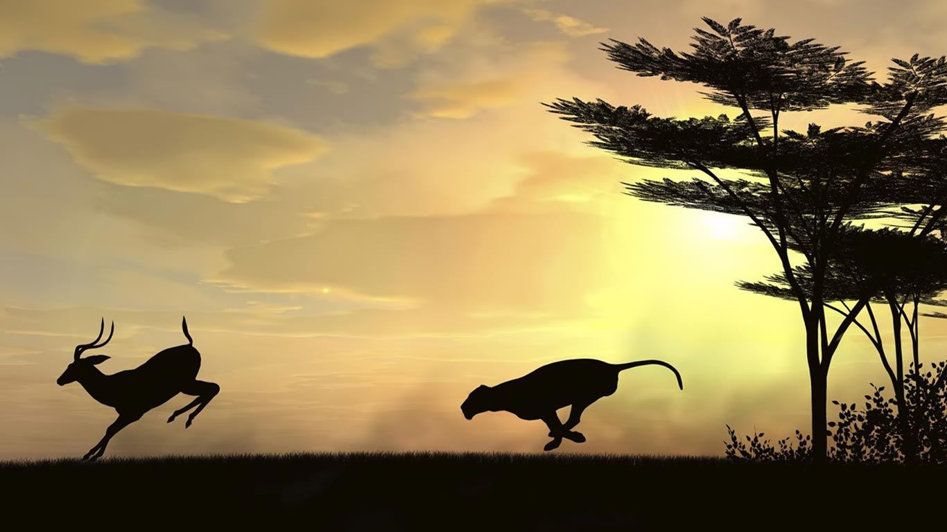 Animal Computers Laptops Netbook Jungle The Chase 100351 Wallpaper wallpaper