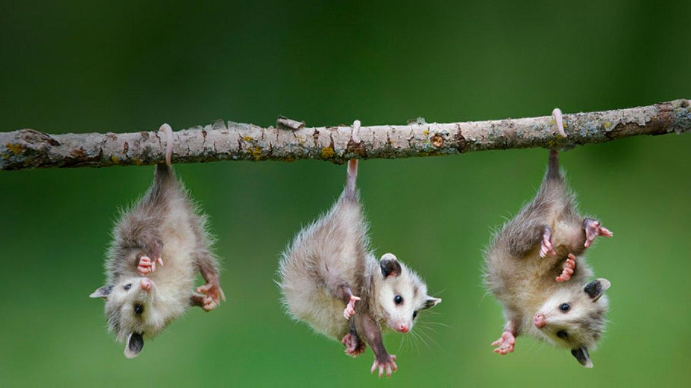Baby Animals Blogthis Berbagi Ke Twitter Facebook Label Plants 818768 Wallpaper wallpaper