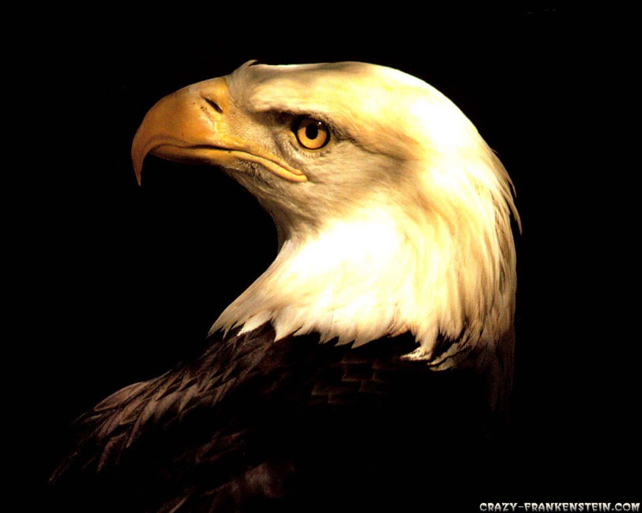 Animal Eagle Crazy Frankenstein 86585 Wallpaper wallpaper
