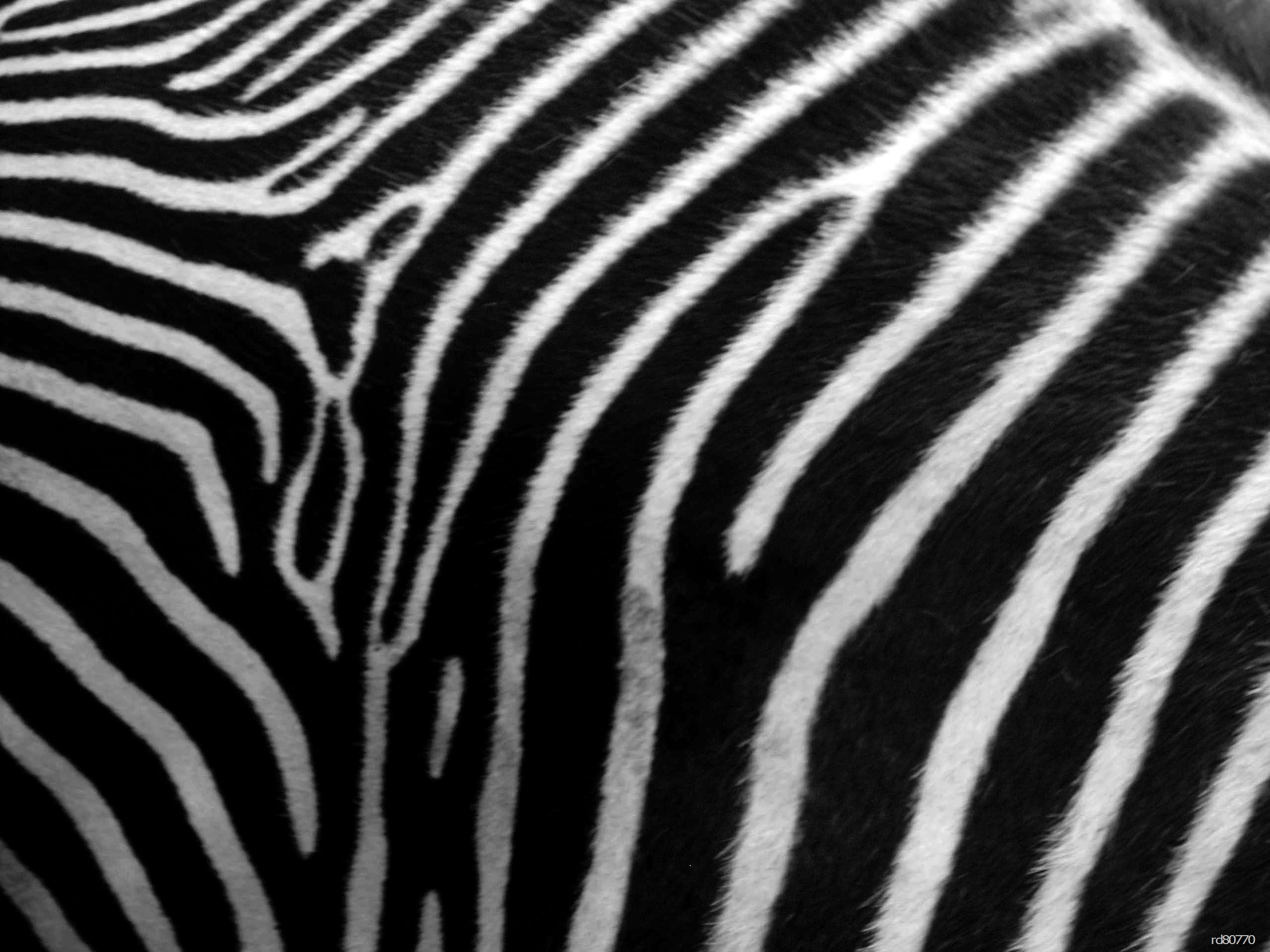Animal Print Zebra Skin Phone 1191141 Wallpaper wallpaper