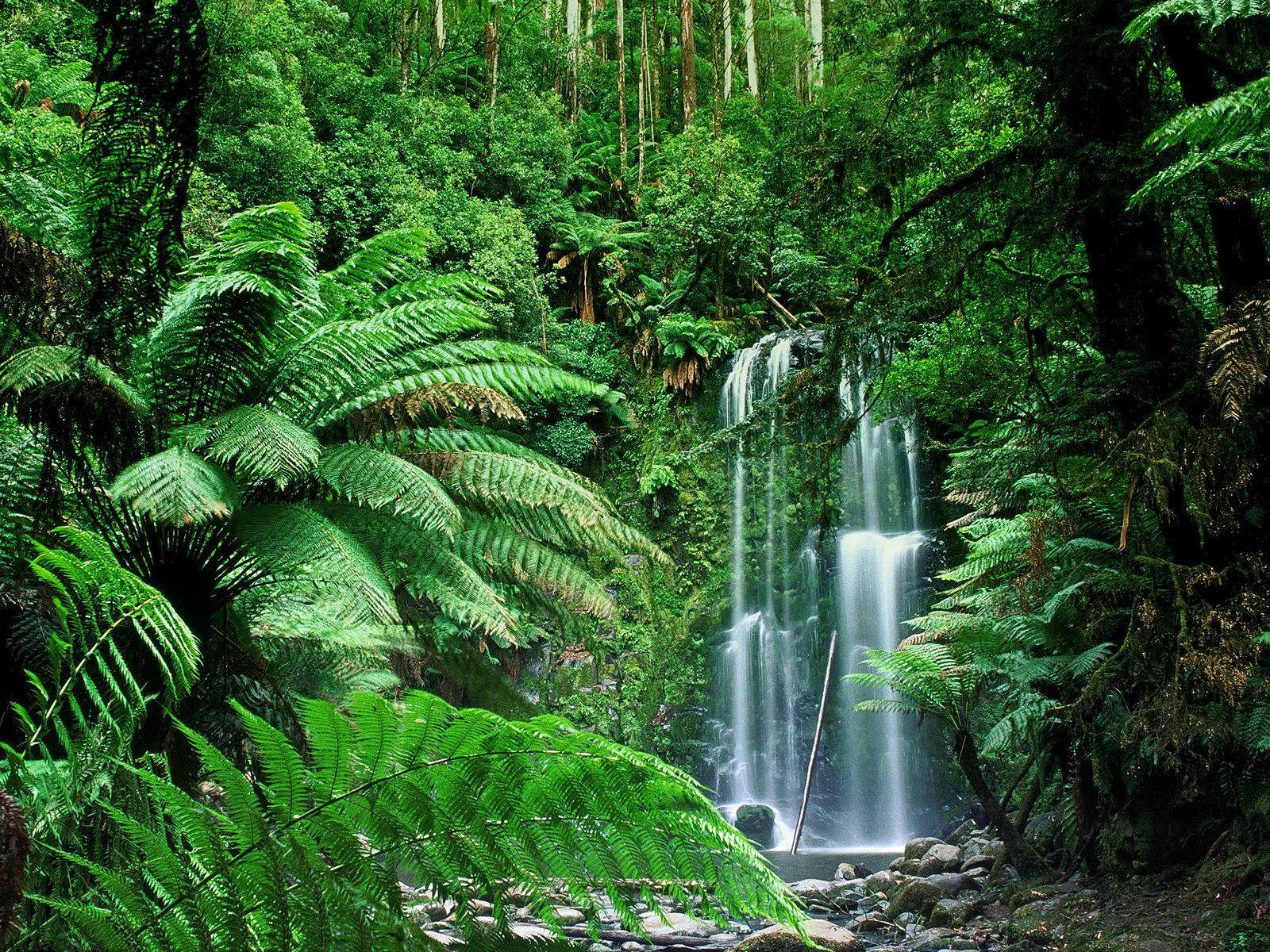 Beauchamp Falls Australia wallpaper