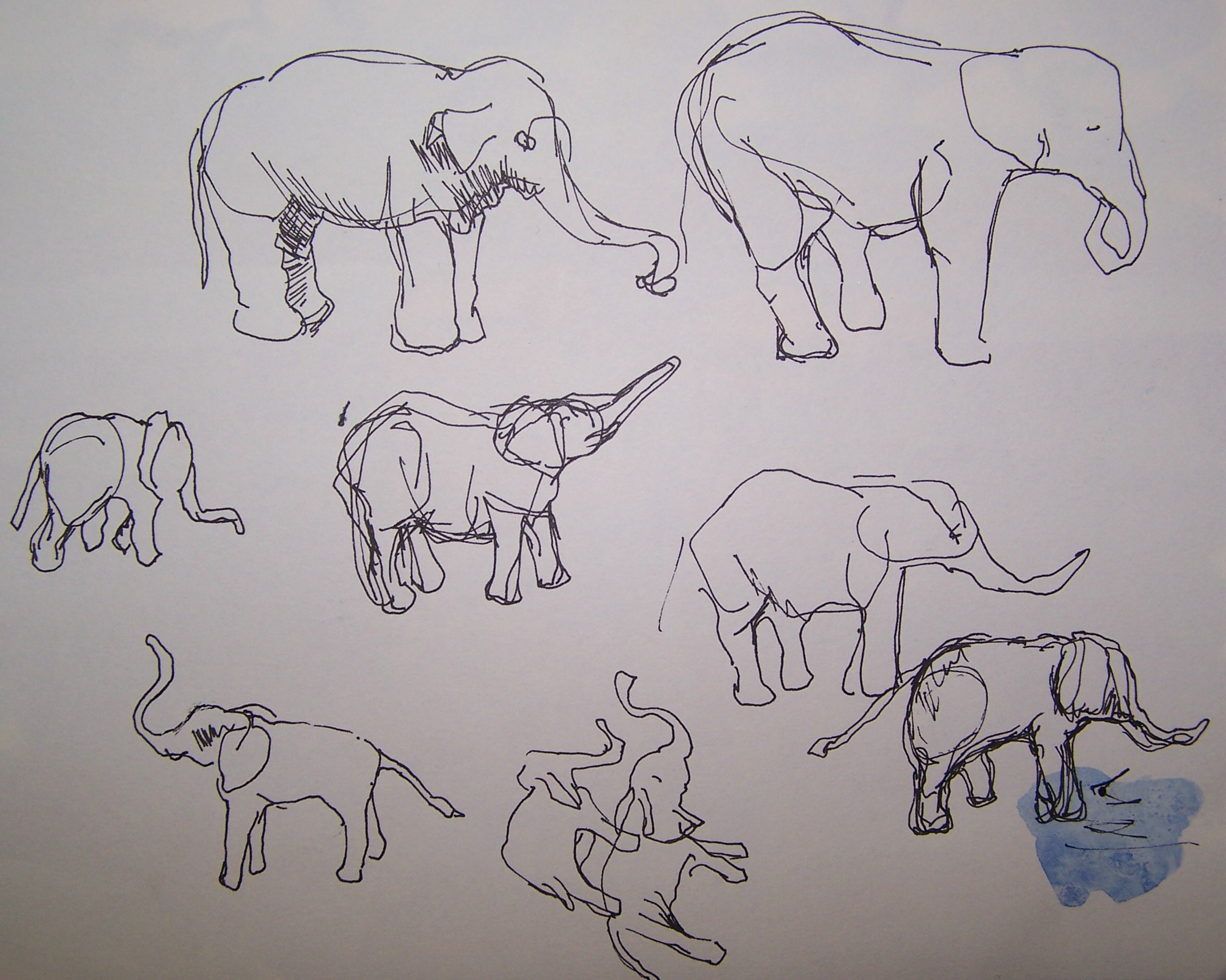 Safari Cartoon Elephant Drawing Images 731334 Wallpaper wallpaper