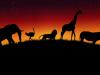 Wild Animals African V By Lukasiniho On Deviantart 1207480 Wallpaper wallpaper