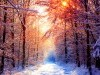 Wild Animals Snow Winter Nature Season Secenery Free 3112824 Wallpaper wallpaper
