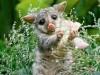Baby Animals Gallery Wombat Free 171980 Wallpaper wallpaper