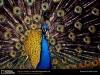 Animals Size X Pixels Best For Medium Monitors 203444 Wallpaper wallpaper