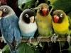 Animals Birds Parrots On A Branch Jpg X 910432 Wallpaper wallpaper