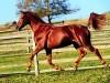 African Animals Horses Bright 248681 Wallpaper wallpaper