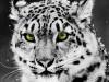 Animal Free 341754 Wallpaper wallpaper