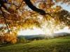 Autumn wallpaper