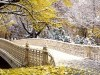 Fall Central Park New York wallpaper