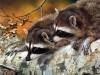 Animal Iii Animals Free 421011 Wallpaper wallpaper