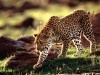 Wild Animals Youwall Animal Free 459432 Wallpaper wallpaper
