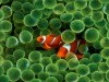 Animal Fish Clown Saver Screen Referers Images Top 1283045 Wallpaper wallpaper