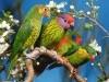 Animales Cotorritas Lindas X Fondos De Pantalla 567017 Wallpaper wallpaper